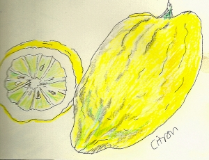 Not for fresh eating. The flesh of the citron is dry and bitter. Citron rind is sometimes candied, used in fruitcake and other baked goods.